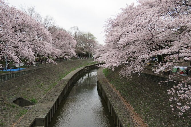 For Spring season, you could enjoy cherry blossoms.