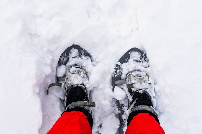 Small-Group Yosemite Valley and Giant Sequoias Snowshoe Tour