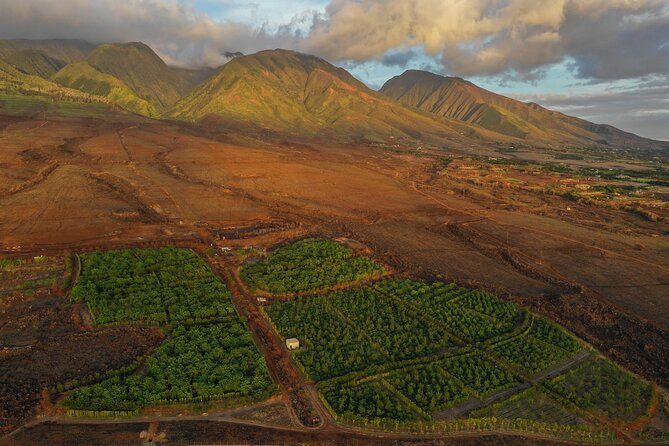 Lahaina Guided Cacao Farm Tour and Chocolate Tasting