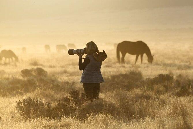 Private Wild Horse Photo Safari from Tooele