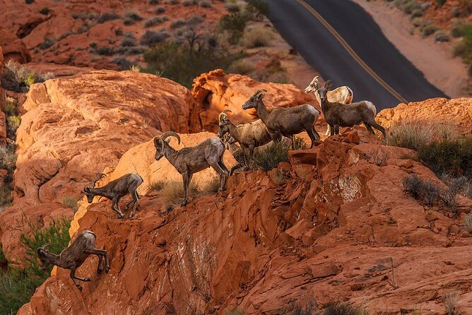Small Group Valley of Fire Day Tour from Las Vegas