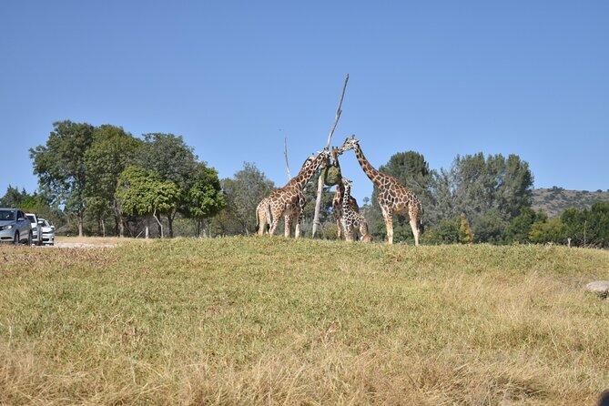 Africam safari experience (private tour)