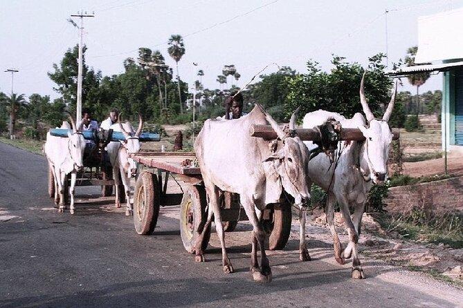 Visit to an Organic Farm in Cumbum Valley - Tamil Nadu
