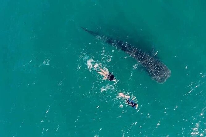 Bahiadelosangeles / swimming with the whale shark / Sanfelipe / puertecitos