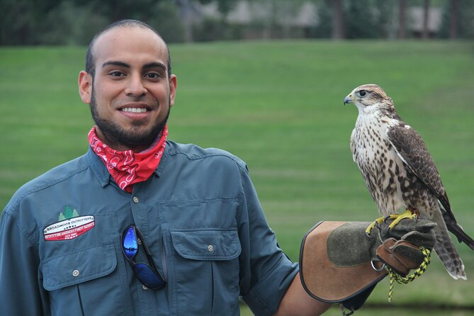 Falconry Beginners Lesson