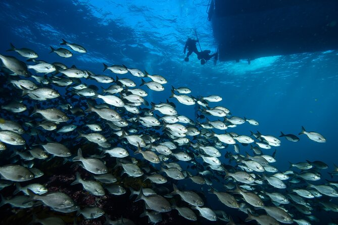 Become a PADI Open Water Diver in 3 Days in Perth