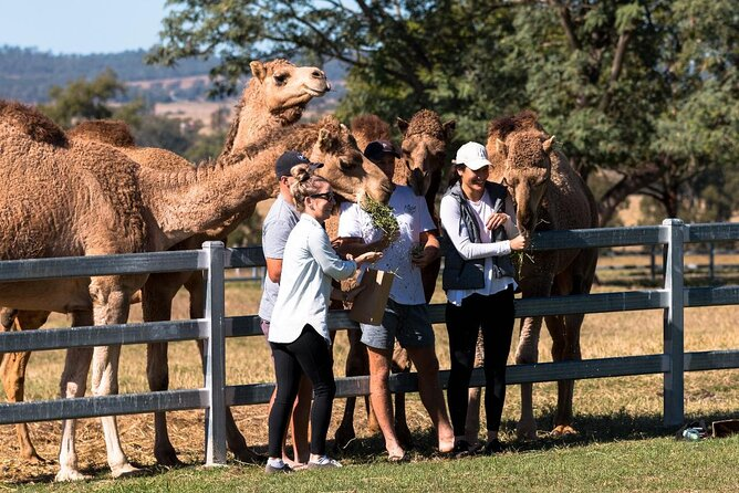 Camel Farm Tour and Taste near Brisbane