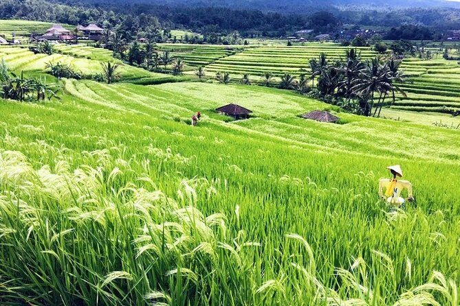 Private Tour Special Bayumala Waterfall-Wanagiri Hill-Rice Terrace UNESCO Site