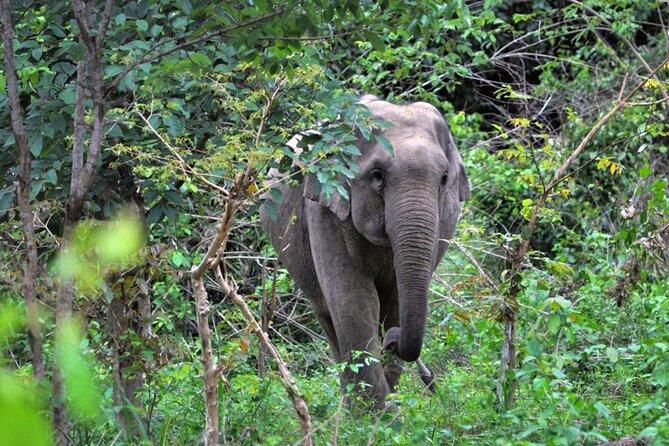 Wild Elephant Watching at Kuiburi National Park Tour