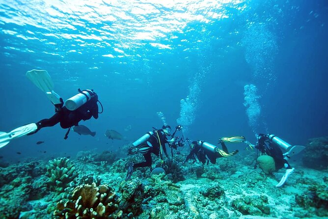 Private Diving Experience in Nusa Dua with Hotel Pick Up