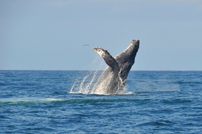 Eco Whale Watching Experience in Puerto Vallarta