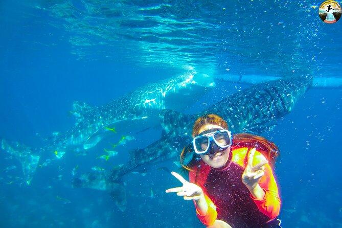 Oslob Whale Shark Swimming and Kawasan Falls Tour