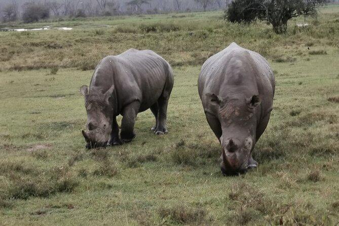 Southern white rhino.
