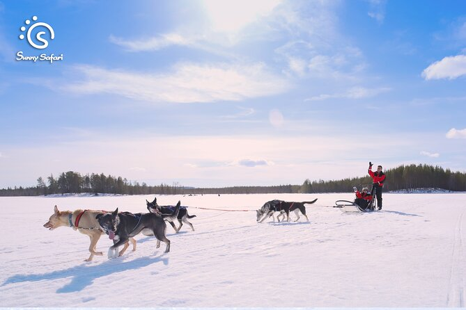 Become a Husky Musher in Lapland