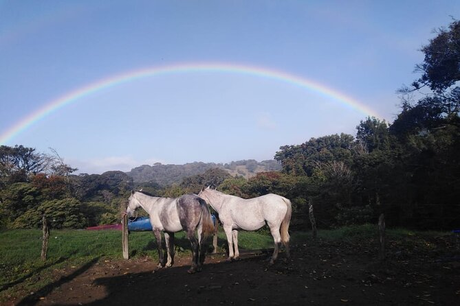 Horseback Riding Tour Plus Coffee Tour 3 in 1 (Coffee Chocolate and sugar cane)
