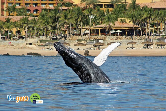 Whale Watching Tour in Los Cabos