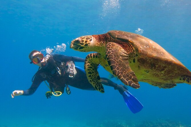 Intro to Scuba Diving in Lahaina