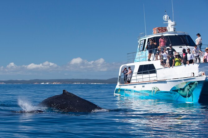 Three-Quarter Day Hervey Bay Premium Whale Watching Cruise
