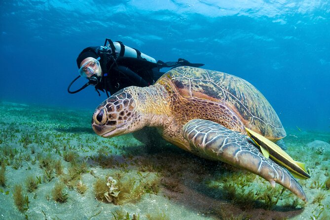 PADI Discover Scuba Diving em Montego Bay