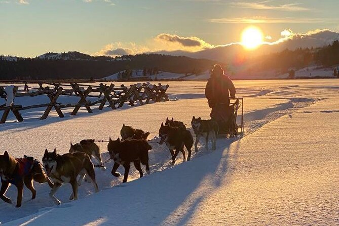 Full-Day Dog Sledding and Snowmobiling Combo Trip