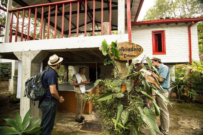 Heldags kaffeoplevelse på Hacienda Coloma fra Bogota