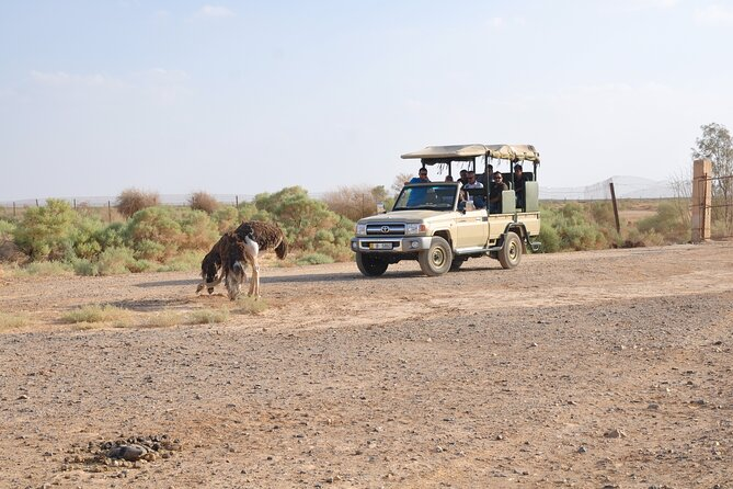Private Shaumari Wildlife Experience and Overnight at Azraq Wetland Reserve.