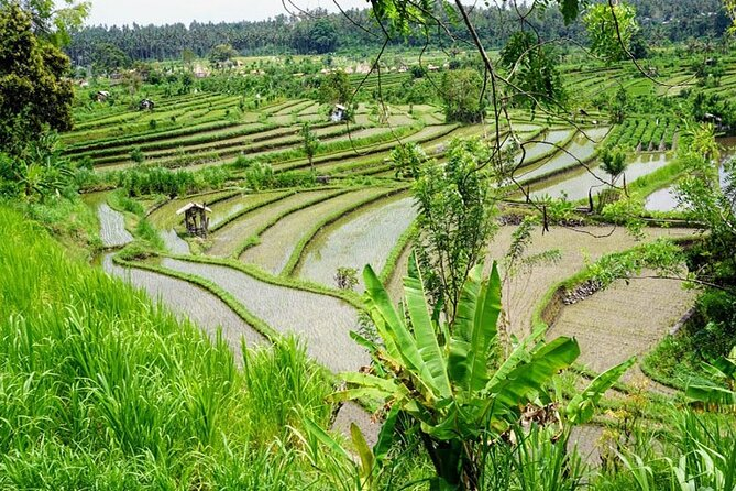 Exciting Trip in Bali on the Best Ride in Two Days
