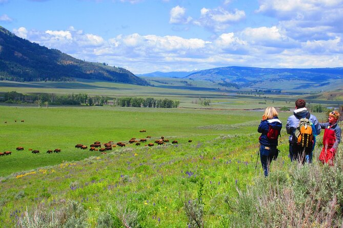 Lamar Valley Safari Hiking Tour with Lunch