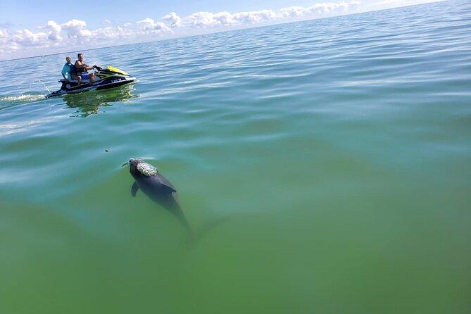Whole Island & Dolphin Jet Ski Tour