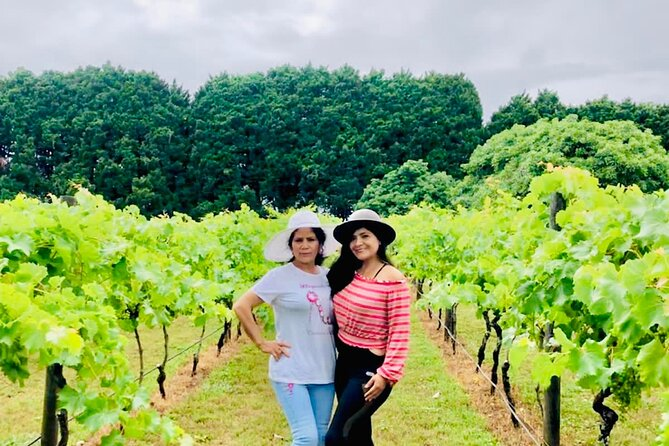 Mt Tamborine Wine Tour