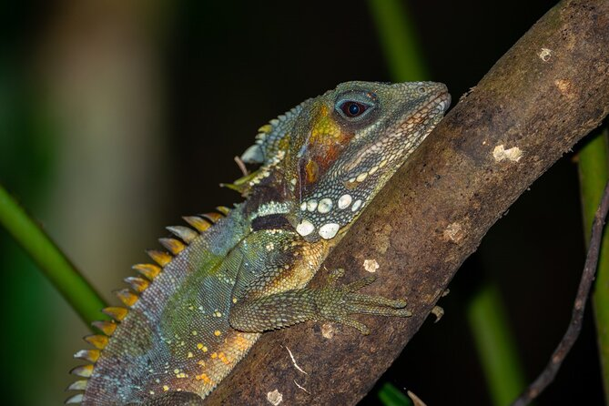 Family Night Walking Tour at Tropical Rainforest in Daintree