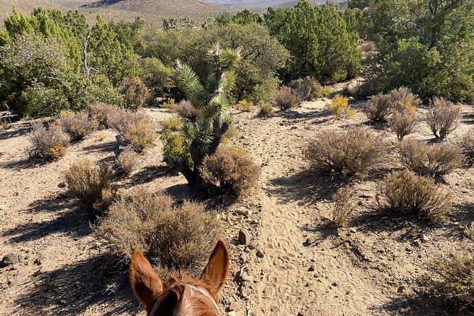 Horseback Riding, Joshua Tree Forest, and Buffalo Tour
