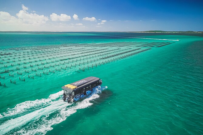 Experience Coffin Bay Short and Sweet Oyster Farm Tour