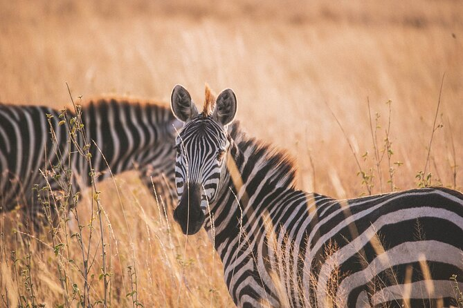 7-Day Private Tour in Arusha with Airport Pickup