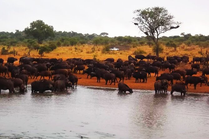 4 Day Kruger park open truck safari experience