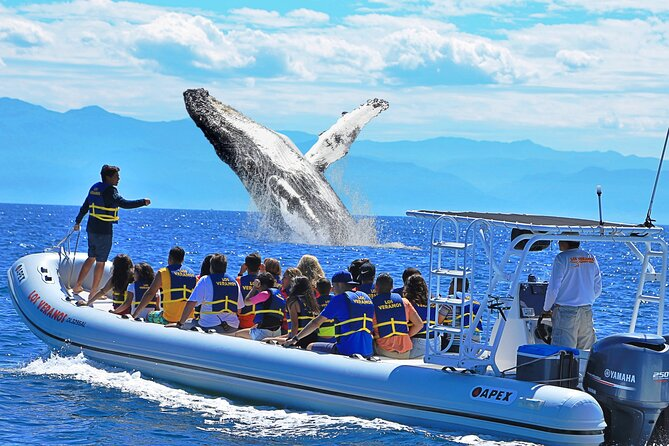 Whale Watching Experience in Puerto Vallarta