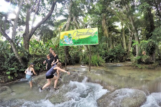 Dunn's River Falls and Luminous Lagoon Tour from Falmouth
