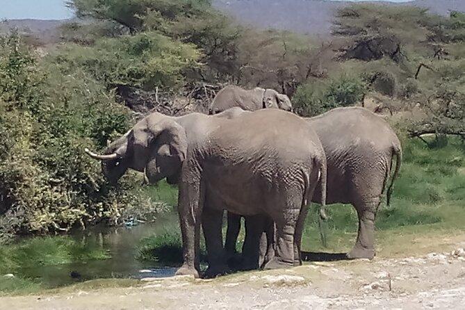 5 Days Safari to Samburu N/R, lake Nakuru N/P, Hells Gate N/P, Lake Naivasha.