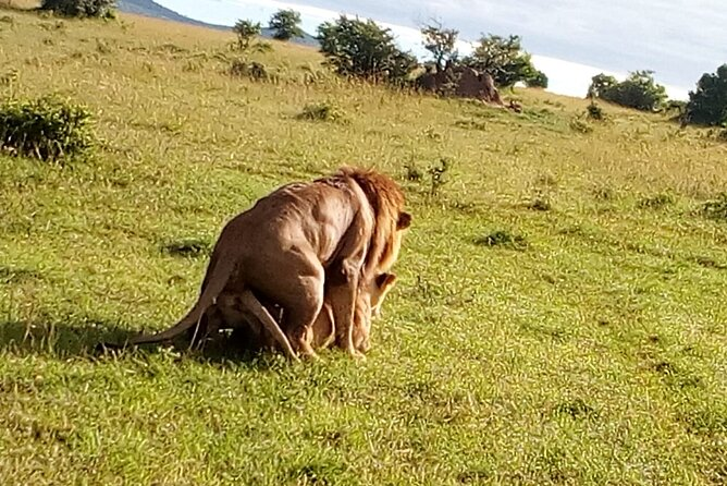 5 Days Safari to Lake Naivasha, Hells Gate N/P, Maasai Mara N/R.