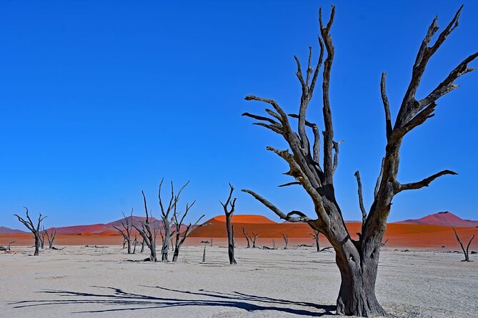 Private Namib Desert, Wildlife and Cultures