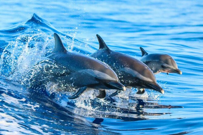 Dolphin Tour and Snorkeling at Mnemba Island reef from Nungwi