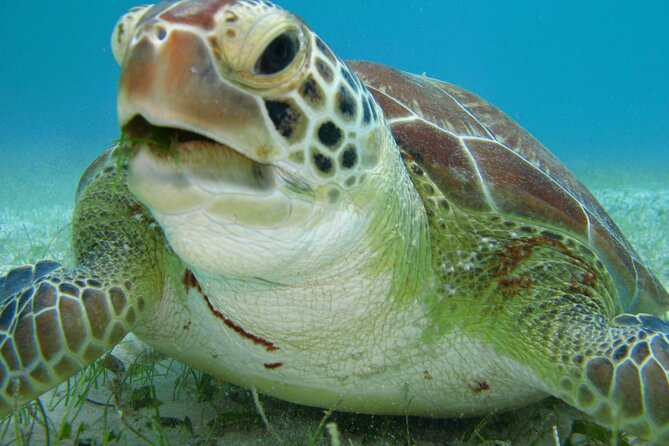 Private Snorkel with Turtle at Akumal