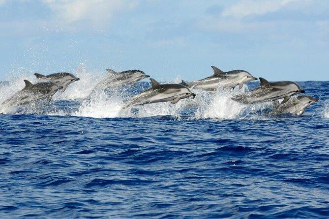 Dolphin & Josani Forest Snorkel Sea Excursion - Zanzibar