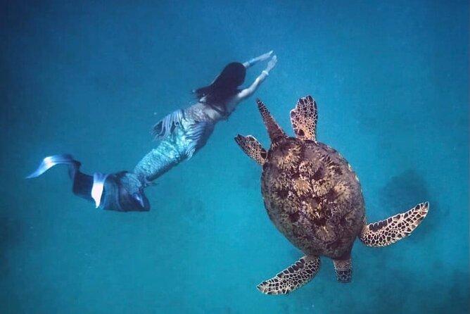 Ala Moana's Marine Life Boat Tour through Waikiki Coast