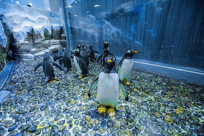 Dubai Aquarium Ticket with Penguin Encounter at Dubai Mall