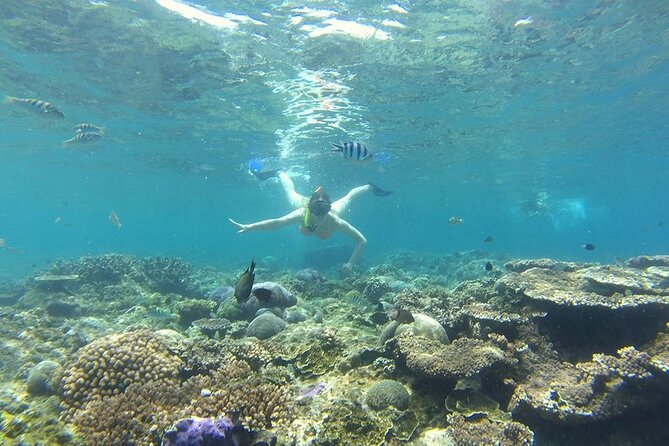 Inclusive Tour : Blue Lagoon Snorkeling - Tirta Gangga - Ubud Waterfall