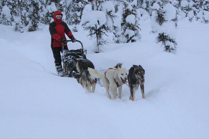 Small-Group Dog Sledding Experience in Sterling