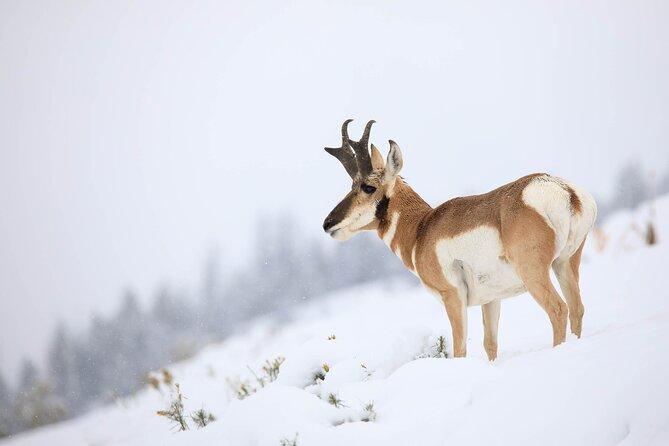 Private Full-Day Yellowstone Wildlife Safari from Gardiner