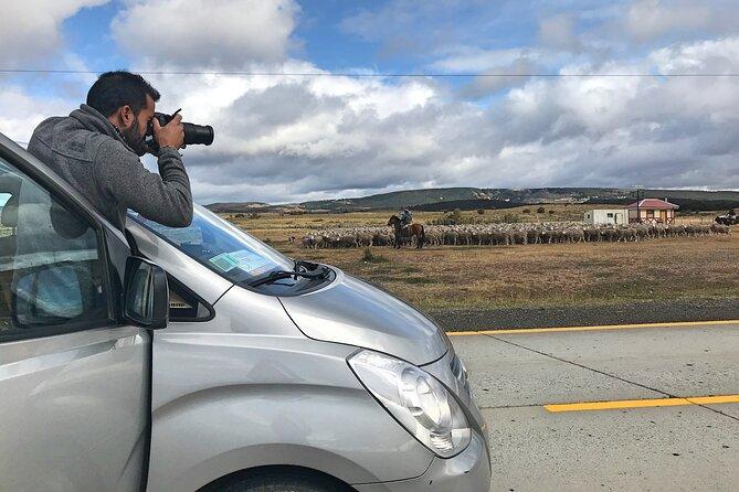 Transfer Punta Arenas to Puerto Natales (or vice versa)