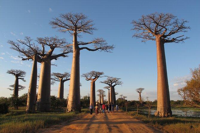 Private 9-Day Morondava Baobabs and Andasibe Lemurs Tour